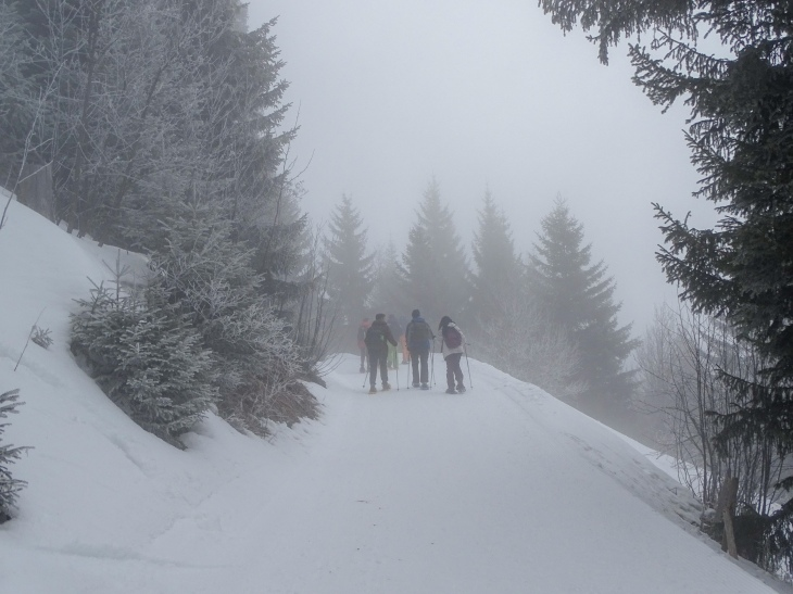 Snowshoeing Leysing Solacyre