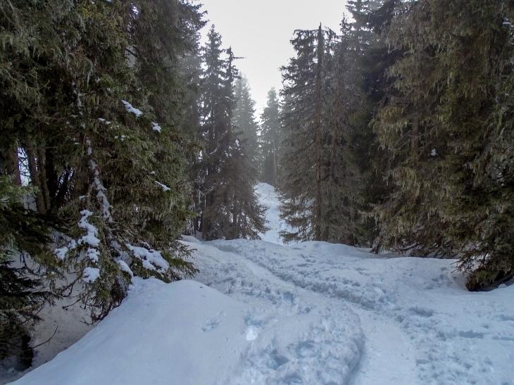Leysin snowshoeing