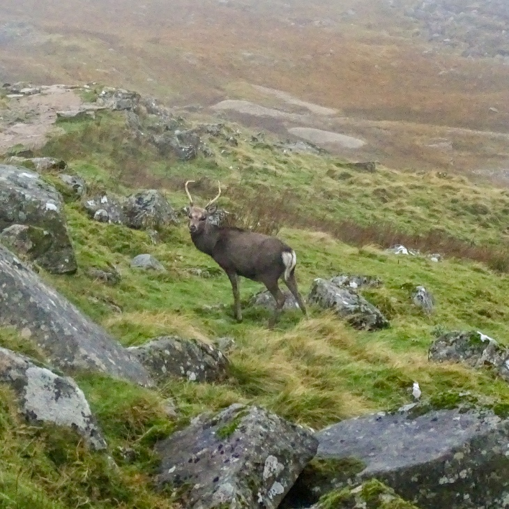 Wildlife at Wicklow